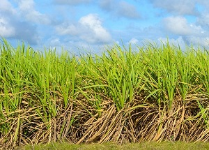 Sugar in Australia: A food system approach